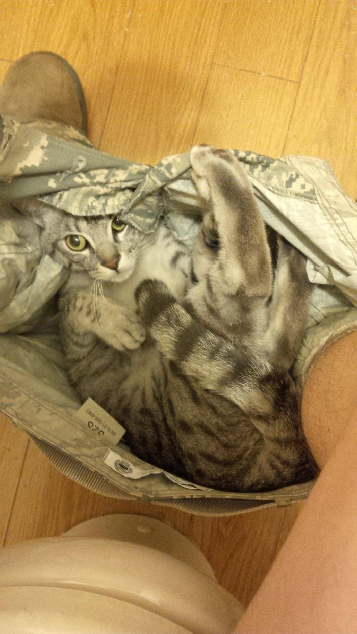 23-Funny-Cats-that-Love-Underwear-in-the-Bathroom-9__700.jpg